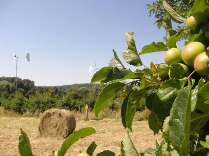 apples bales and wind turbines